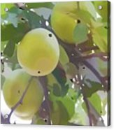 Delicious Yellow Apple In Summer Acrylic Print