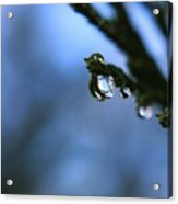 Delighted By Droplets Acrylic Print