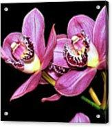 Delightful Orchid Acrylic Print