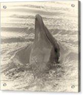 Delphin 1 Acrylic Print