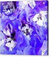 Delphinium Flowers Acrylic Print