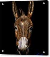 Dem-donkey Acrylic Print