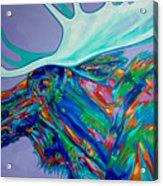 Denali Moose Head Acrylic Print