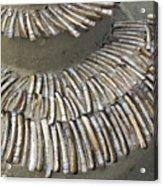 Denmark, Romo, Seashells, Razor Clams Acrylic Print