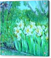 Dependable Daffodils Acrylic Print
