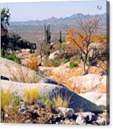 Desert Autumn Acrylic Print