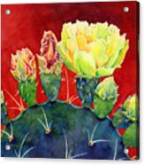 Desert Bloom 3 Acrylic Print