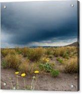 Desert Bloom Acrylic Print