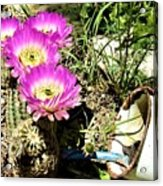 Desert Blossom Acrylic Print