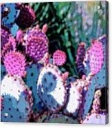 Desert Blush Acrylic Print