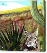 Desert Bobcat Acrylic Print