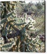 Desert Cactus 4 Acrylic Print