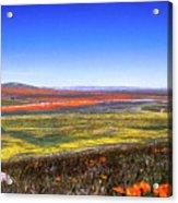 Desert Carpet Acrylic Print