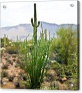 Desert Chaparral Acrylic Print