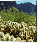 Desert Cholla 1 Acrylic Print