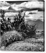 Desert Clouds Acrylic Print