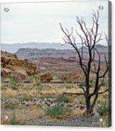 Desert Colors Acrylic Print