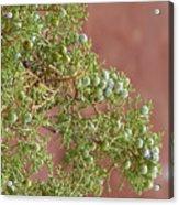 Desert Elements 7 Acrylic Print