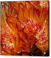 Desert Fire Acrylic Print