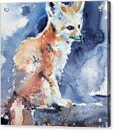 Desert Fox Acrylic Print
