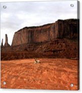 Desert Friend Acrylic Print
