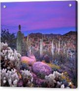 Desert Garden Acrylic Print by Eric Foltz