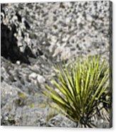 Desert Green Acrylic Print