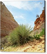 Desert Greenery Acrylic Print