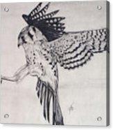 Falcon I Acrylic Print
