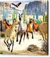 Desert Horses Acrylic Print