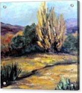 Desert in the Springtime Acrylic Print