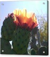 Desert Jewels II Acrylic Print