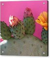 Desert Jewels IIi Acrylic Print