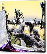 Desert Landscape - Joshua Tree National Monment Acrylic Print