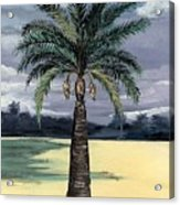 Desert Palm 2 Acrylic Print