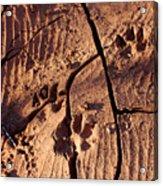 Desert Paw Prints Acrylic Print