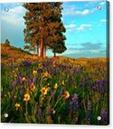Desert Pines Meadow Acrylic Print