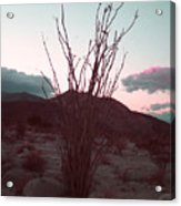 Desert Plant And Sunset Acrylic Print
