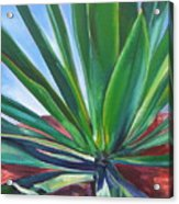 Desert Plant Acrylic Print
