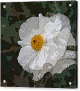 Desert Poppies Acrylic Print