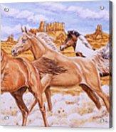 Desert Run Acrylic Print by Richard De Wolfe