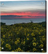 Desert Sunflowers Coastal Sunset Acrylic Print
