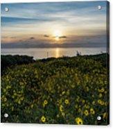 Desert Sunflowers Coastal Sunset 2 Acrylic Print