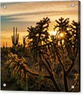 Desert Sunshine Shining Through  Acrylic Print