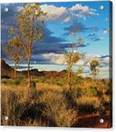 Desert Track Acrylic Print