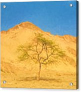 Desert Tree Acrylic Print