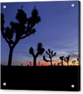 Desert Trip II Acrylic Print