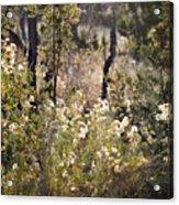 Desert Weeds Acrylic Print