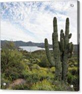 Desert Wildflower View Acrylic Print