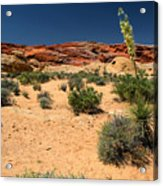 Desert Yucca In Bloom Valley Of Fire Acrylic Print